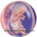 13 haftalık bebek üçboyutlu görüntüsü